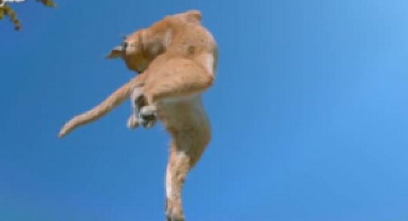 تا به حال فکر کرده اید گربه ها چگونه پس ازسقوط ازارتفاع جان سالم به در میبرند؟