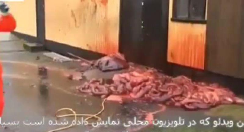 انفجار وحشتناک شکم نهنگ حین سلاخی ! دیدن این ویدیو به همه توصیه نمیشود.