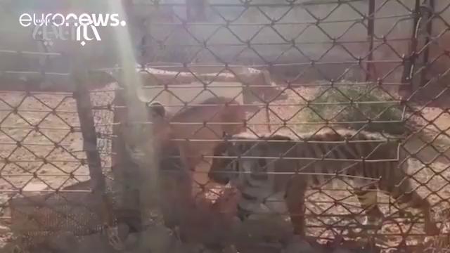 مداوای حیوانات باغ وحش حلب سوریه در ترکیه