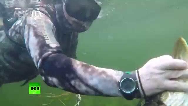 غواصی و ماهیگیری پوتین در سیبری