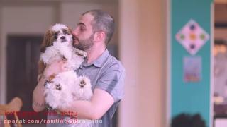 آموزش محل ادرار به سگ ها
