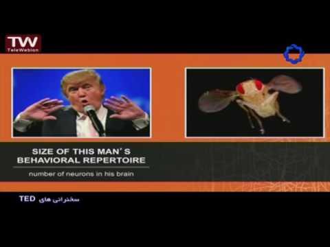 سخنرانی تد دوبله فارسی-مگس چگونه پرواز می کند سخنران