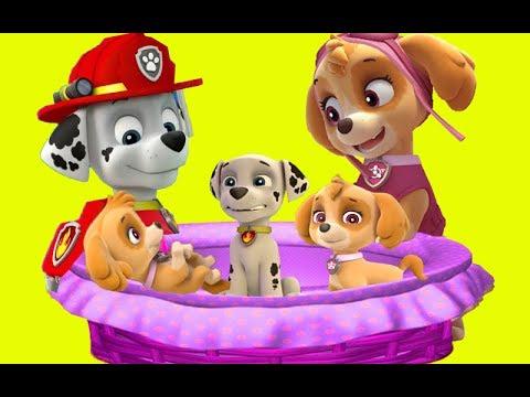 کارتون سگ های نگهبان قسمت 39 دانلود انیمیشن سگ های نگهبان