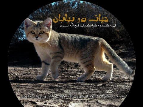 دانلود مستند زیبای ایرانی «حیات در بیابان» از فتح اله امیری در شبکه جهانی جام جم