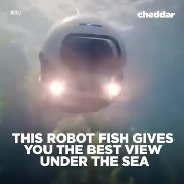 ربات ماهی