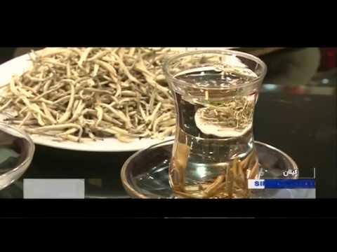 تهیه چای- برداشت و دم كردن چاي سپيد ايران