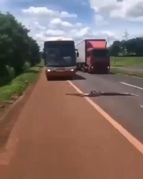 عبور ماری غول پیکر از اتوبانی در برزیل!