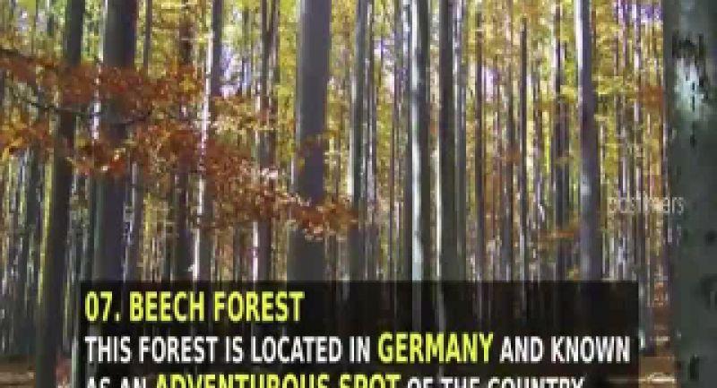 خطرناک ترین جنگل های جهان برای مسافرت