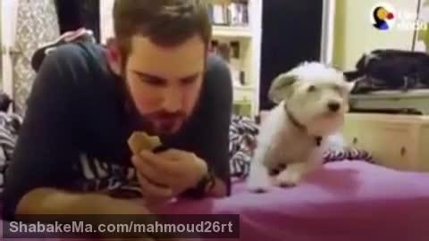 غذا خوردن به دور از چشم حیوان خانگی