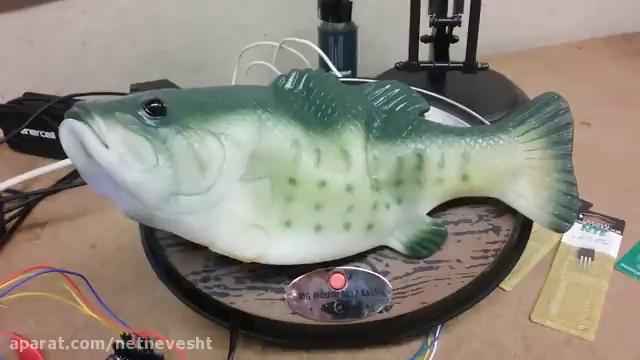 این ماهی حرف می زند و سوالات شما را جواب می دهد!