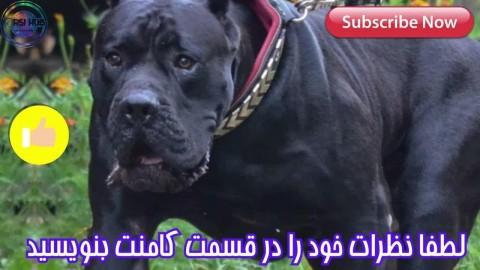 خطرناک ترین نژاد های سگ در جهان!!