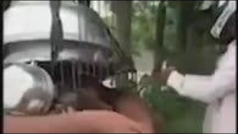 رکنا:یک مرد، سگهایی که یک قصاب برای طبخ غذا با قفس حمل میکرد، خریداری کرد و جانشان را نجات داد.
