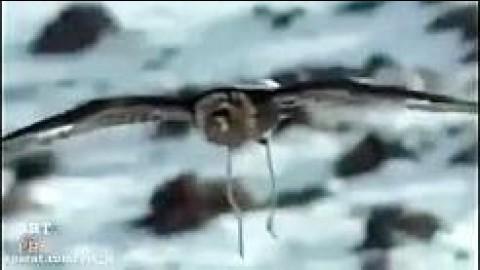 برترین حملهها و شکارهای عقاب در حیات وحش